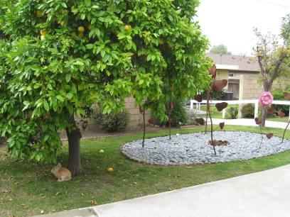 Our Grapefruit tree